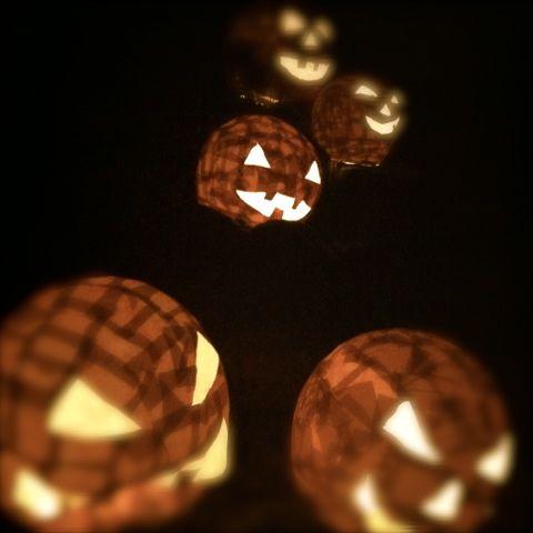 かぼちゃ複数.jpg